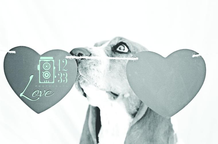 V_Day_Dog_2